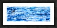 Tern Impression et Cadre photo