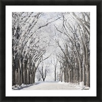 Winnipeg, Manitoba, Canada; A Road And Trees Covered In Snow In Winter Picture Frame print