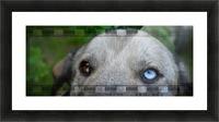 Blue Eyed Dog Picture Frame print