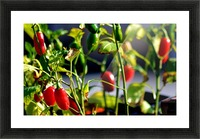 Peppers Picture Frame print