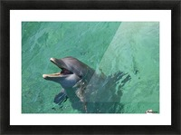 Roatan, Bay Islands, Honduras; Bottlenose Dolphin (Tursiops Truncatus) At Anthony's Key Resort Picture Frame print