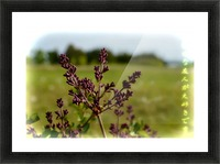 Flowers Picture Frame print
