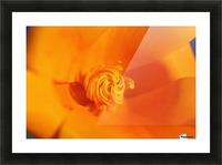 Close Up Of A Poppy Flower; Happy Valley, Oregon, Usa Picture Frame print