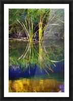 Reeds Reflecting On The Water; St. Albert, Alberta, Canada Picture Frame print