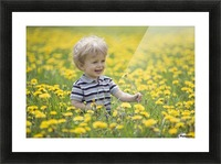 18-Month-Old Boy In Dandelion Field; Thunder Bay, Ontario, Canada Picture Frame print