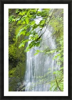 Marymere Falls, Olympic National Park Picture Frame print
