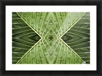 Close up of vein patterns in leaves;Gold coast queensland australia Picture Frame print