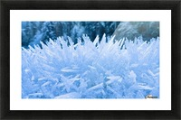 Close Up Of Hoar Frost Along The North Fork Of The Nooksak River During Winter, Mount Baker National Forest, Washington, Usa Picture Frame print