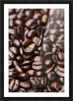 Medium dark roast Kona coffee beans close up; Holualoa, Big Island, Hawaii, United States of America Picture Frame print