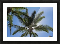 Coconut Palms backlit by the sunlight in a blue sky; Poipu, Kauai, Hawaii, United States of America Picture Frame print