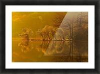 Gold Morning, Lake District, UK Picture Frame print