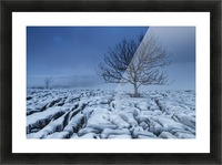 Cold Blue Trees, Yorkshire Dales, UK Picture Frame print