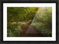 The Path to Fairytales, Ramsons Wood, Lancashire, UK Picture Frame print