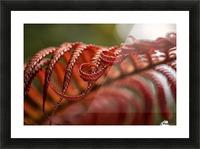 Close up of a crimson Amau fern; Hawaii, United States of America Picture Frame print