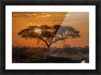 Silhouette of acacia tree at orange sunset; Botswana Picture Frame print