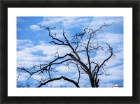 A dead tree is silhouetted against the sky; Tahlequah, Oklahoma, United States of America Picture Frame print