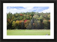 Colourful trees in autumn; Woodstock, Vermont, United States of America Picture Frame print