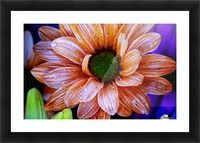 FPS-0058 Picture Frame print