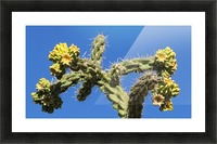Cactus in bloom Picture Frame print
