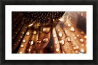 FPS-0079 Picture Frame print