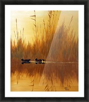 American Wigeon Picture Frame print