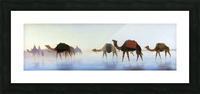 Camels crossing water Picture Frame print