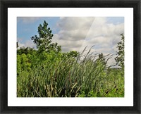 Cattails In The Wind Picture Frame print