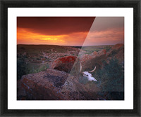 Cow Skull With Large Rocks In Field With Sunset, Writing On Stone Provincial Park, Alberta, Canada Picture Frame print