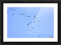 Flock of Geese 2 Picture Frame print