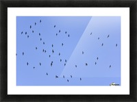Flock of Geese 1 Picture Frame print