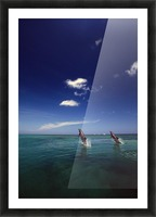 Two Bottlenose Dolphins Dancing Across Water On Tails, Caribbean Sea Picture Frame print