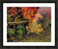 Balustrades & Autumn Colours, Castlewellan, Co Down, Ireland Picture Frame print
