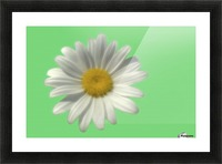 Soft bloom daisy Picture Frame print