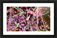 weeds Picture Frame print