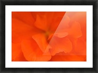 Waterloo, Quebec, Canada; Close-Up Of Red Begonia Picture Frame print