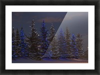 Calgary, Alberta, Canada; A Row Of Evergreen Trees With Christmas Lights Picture Frame print