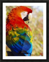 All the Colors of the Rainbow Picture Frame print