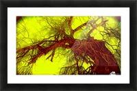 100yearoldtreeNUMBERtwo Picture Frame print