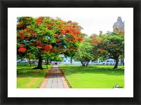 St Kitts Independence Square5 Picture Frame print