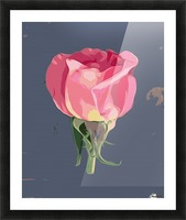 pink rose with grey background Picture Frame print