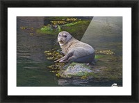 Sea lion near Depoe Bay, OR Picture Frame print