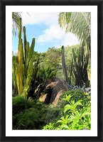 Nevis cactus Picture Frame print