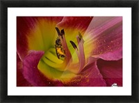 Bee Inside Corn Lily - Landscape Picture Frame print