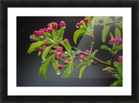 Spring has Sprung Picture Frame print