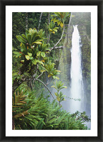 Hawaii, Big Island, Akaka Falls Surounded By Ti-Leafs And Greenery. Picture Frame print