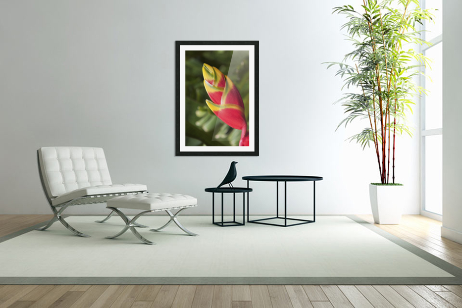Close-up of lobster-claw heliconia flower; Maui, Hawaii, United States of America in Custom Picture Frame