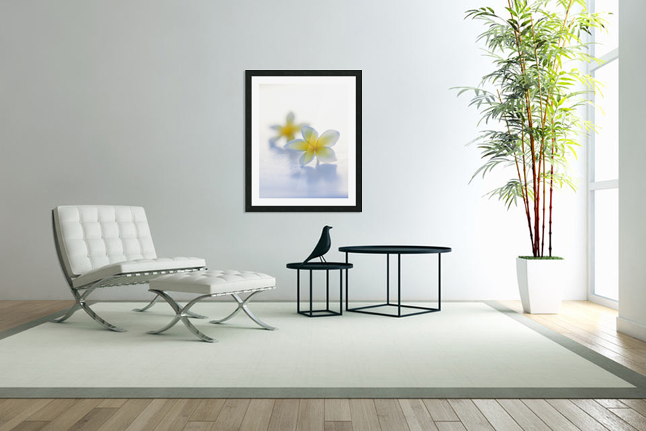 Close-up of two beautiful yellow Plumeria flowers (Apocynaceae) in soft focus; Honolulu, Oahu, Hawaii, United States of America in Custom Picture Frame