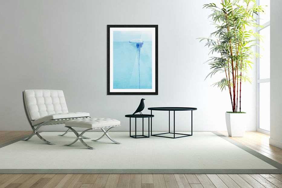 Hawaii, Close-Up Of Portugese Man O'war (Physalia Physalis) Jellyfish. in Custom Picture Frame
