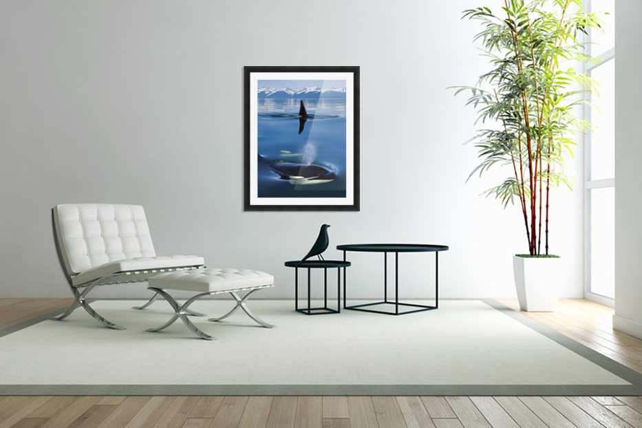 Composite: Close Up Of Orca Whales As They Surface In Lynn Canal With The Coast Range Mountains In The Background, Inside Passage, Southeast Alaska in Custom Picture Frame