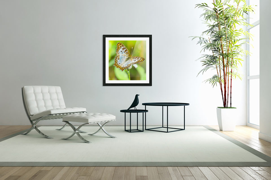 Psychedelic White Peacock Butterfly in Custom Picture Frame